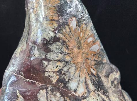 飾石・鉱石・化石 Decorative stone,ore,fossil